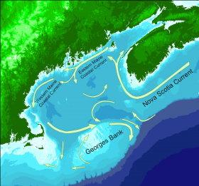 Gulf of Maine Currents