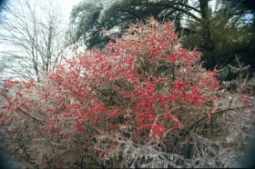 Ice Storm, 1998, in Harpswell