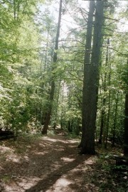 Path in Lewiston's Thorncrag Sanctuary (2002)