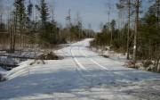 Woods Road (2006)
