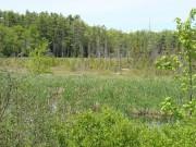 Marsh River Bog (2008)