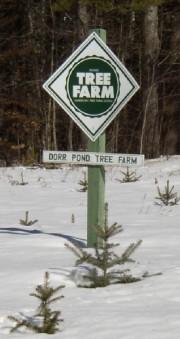 Tree Farm (2003)