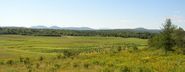 The New Vineyard Mountains from Route 43