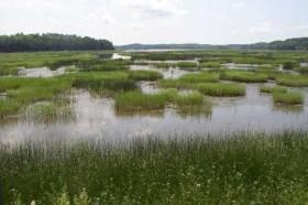 Tidal Wetland off U.S. Route 1 (2003)